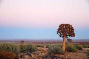 uizicht Quiver Tree