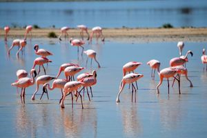 Flamingo's in Walvis Bay