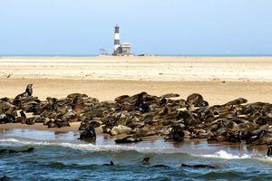 Zeehonden in Walvis Bay - Walvis Bay - Namibië