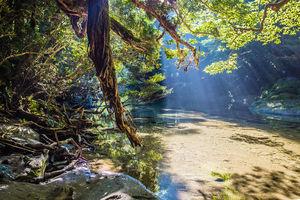 natuur - Yakushima - Japan - foto: flickr