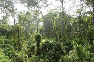 natuur Chitwan