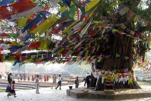 Lumbini - Lumbini - Nepal