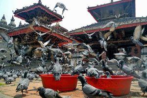 Duiven bij Durbar Square in Kathmandu - Kathmandu - Nepal