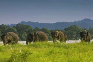 olifanten in het Chitwan National Park - Chitwan National Park - Nepal