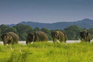 olifanten in het Chitwan National Park - Chitwan National Park - Nepal - foto: Barahi Jungle Lodge