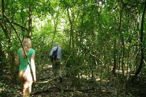trekking in budongo forest