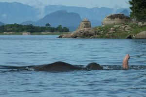 Olifant - meer - Gal Oya National Park - Sri Lanka - foto: Gal Oya Lodge