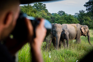 olifanten - Yala National Park - Sri Lanka - foto: shutterstock