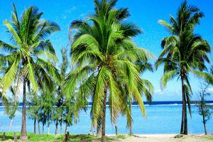 PLAGE DE TROU D'EAU - PLAGE DE TROU D'EAU - Réunion
