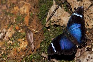 Vlinder in het Nyungwe National Park - Nyungwe National Park - Rwanda