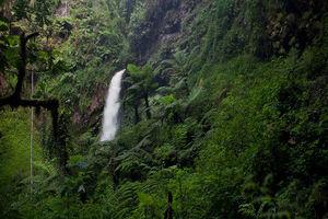 Waterval in het Nyungwe National Park - Nyungwe National Park - Rwanda