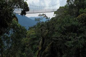 Loopbrug in het Nyungwe National Park - Nyungwe National Park - Rwanda