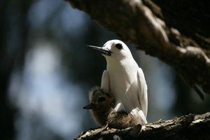 Vogeltjes Denis Island