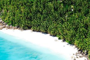 Strand met palmbomen - Seychellen