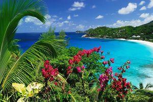 Uitzicht met bloem - Mahe - Seychellen