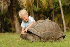 Jongetje met schildpad - Silhouette - Seychellen
