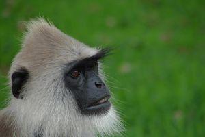 aap - sri Lanka
