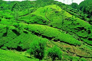 theevelden Nuwara Eliya - Nuwara Eliya - Sri Lanka