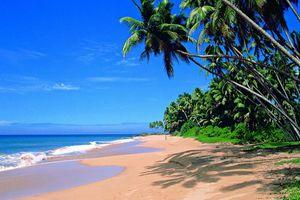 strand met palmbomen