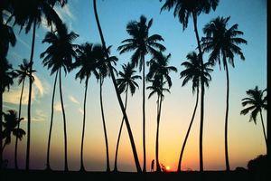 zonsondergang palmbomen - Unawatuna - Sri Lanka