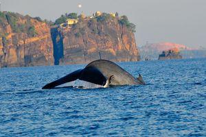 walvis bij Trincomalee