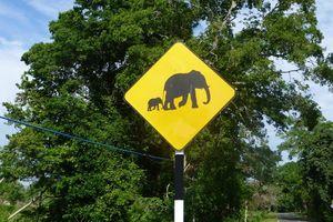 Verkeersbord olifanten Udawalawe National Park - Udawalawe National Park - Sri Lanka