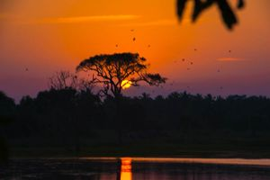 Zonsondergang achter boom, Sri Lanka - Sri Lanka