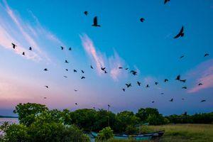 Vogels in de blauwe lucht van Sri Lanka - Sri Lanka - foto: Archief