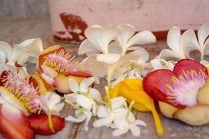 bloemen offers - Sri Lanka