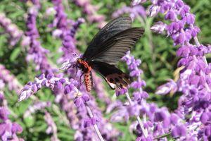 vlinder wuling farm - Wuling - Taiwan