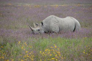 neushoorn - Ngorongoro - Tanzania
