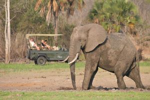 selous safari camp - selous safari camp - Selous game reserve - Tanzania