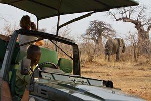 Olifant gespot tijdens de safari - Ruaha Rivier Lodge - Tanzania