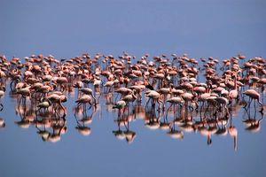 Flamingo's in Lake Natron - Lake Natron - Tanzania