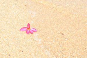 Samui bloem - Koh Samui - Thailand