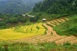Groene omgeving Chiang Mai - Omgeving Chiang Mai - Thailand