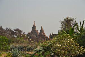 tropische tuin en tempels - Bagan - Myanmar - foto: Daniel de Gruiter
