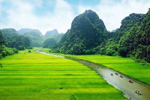 Rijstvelden, Ninhbinh - Vietnam