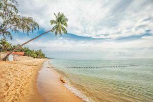Palmboom met strand, Phu Quoc - Vietnam