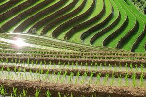 Rijstterrassen van Mu Cang Chai (1) - Mu Cang Chai - Vietnam