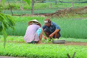 boeren aan het werk in Hoi An (2) - Hoi An - Vietnam