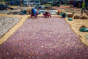 Vismarkt - Negombo - Sri Lanka - foto: flickr