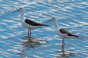 Vogels - Gal Oya National Park - Sri Lanka
