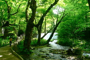 wandeling - Oirase Gorge - Japan - foto: flickr