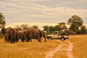 Olifanten tijdens safari - Zambia
