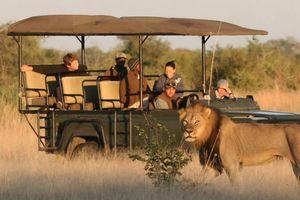 camp hwange safari vehicle - Camp Hwange - Zimbabwe