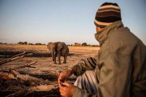 camp hwange safari - Camp Hwange - Zimbabwe