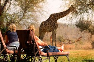 giraffe in camp - Mohlabetsi Safari Lodge - Balule Game Reserve - Zuid-Afrika