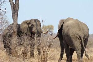 olifanten - Kruger/Safari - Zuid-Afrika