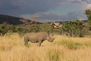 Neushoorn in het Kololo Game Reserve - Kololo Lodge - Zuid-Afrika